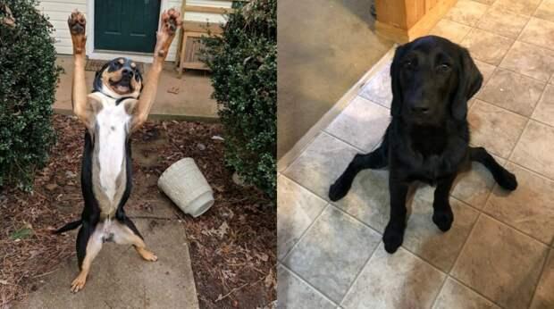 10+ веселых фото о том, что с собаками некогда скучать