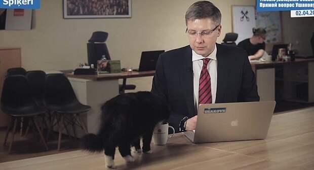 Чёрный кот помешал общению Ушакова с рижанами в прямом эфире. Фото: скрин с видео