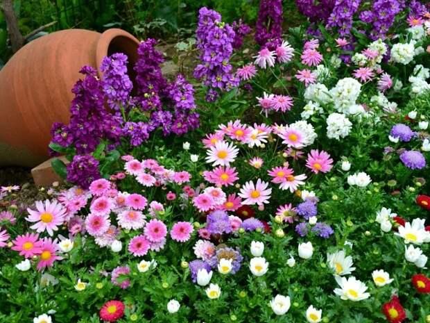 Многолетние цветы долгого цветения.