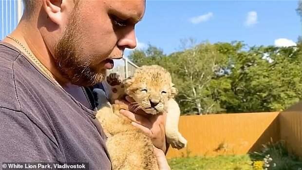Овчарка Сандра взялась выкармливать двух львят, хотя терпеть не может кошек