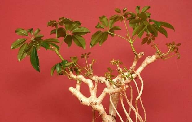 Как узнать, погибло ли растение или просто находится в спячке