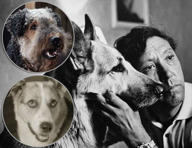 Самые известные собаки советского кино
