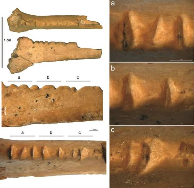 Было ли у неандертальцев эстетическое чувство?