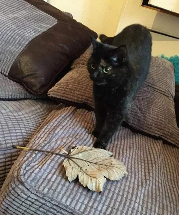 Кошка приносила хозяину мышек и ящериц, но он просто выбрасывал ее «презенты»