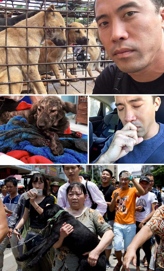 Этот мужчина спас 1000 собак,предназначенных для фестиваля собачьего мяса в Юлине, хотя и был за это избит  Счастливый конец, животные, спасение