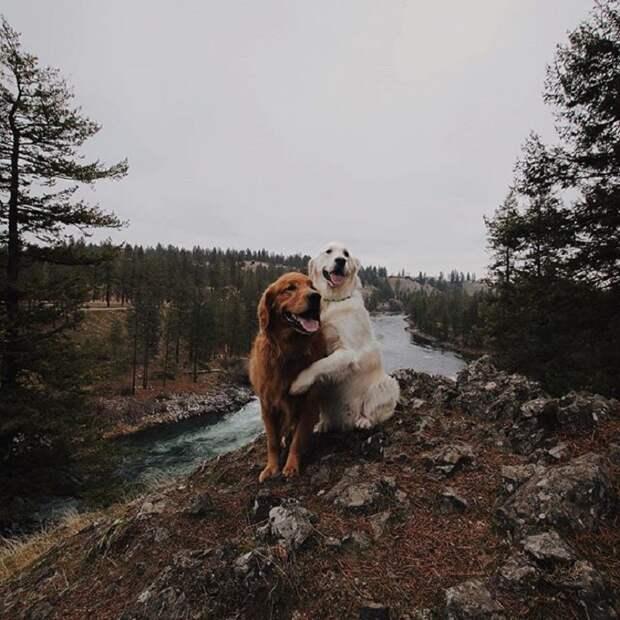 Кико и Уотсон всегда в хорошем расположении духа.