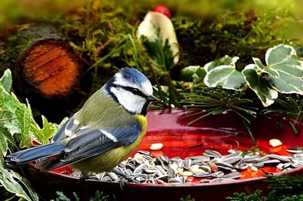 Источник фото: pxfuel.com