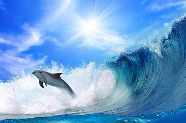 Дельфины — самые интеллектуальные существа