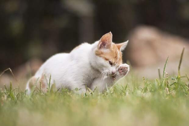 «Обхохочешься, правда?»: десятилетний мальчик Коля первый раз в жизни подрался, защищая бездомного кота с бутылкой на хвосте