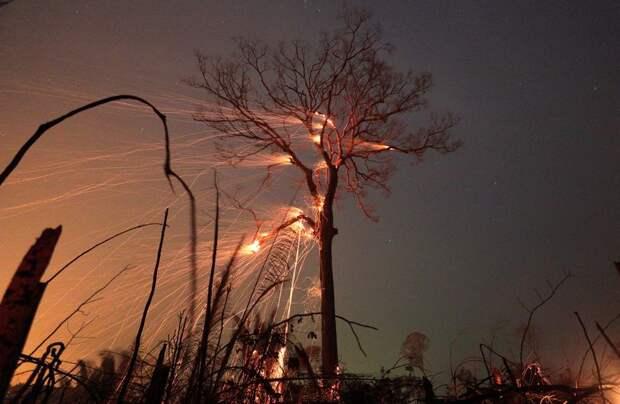 СМИ: в США при лесных пожарах погибли больше 20 человек