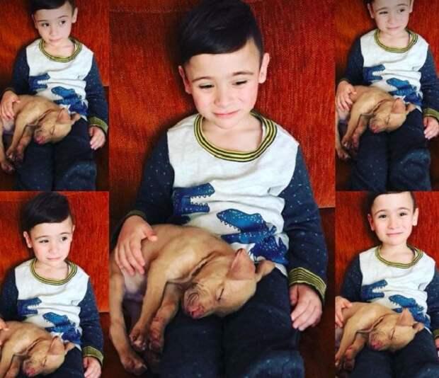 Мальчик со своей собакой