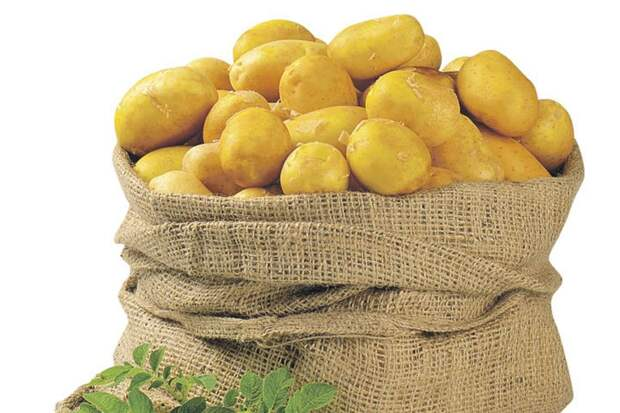 Скоро сажать картошку!