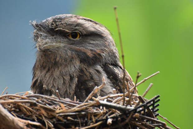 Птицы свили гнездо на балконе или у окна: приметы