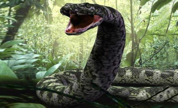 Змеи-гиганты, которые охотились даже на динозавров