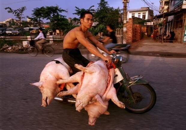 Вьетнам: нюансы правил дорожного движения Вьетнам, азия, вождение, море, мотобайк, отдых, перевозки, юмор
