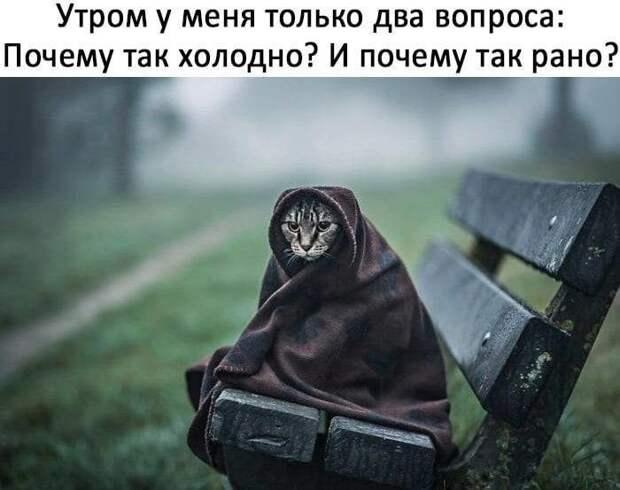 Еще Пушкин говорил, что кот, когда ходит налево...