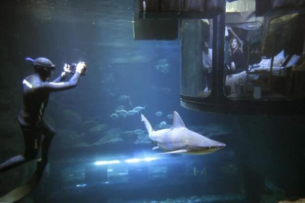 В Париже открылась первая подводная спальня, в которой гости могут спать рядом с акулами