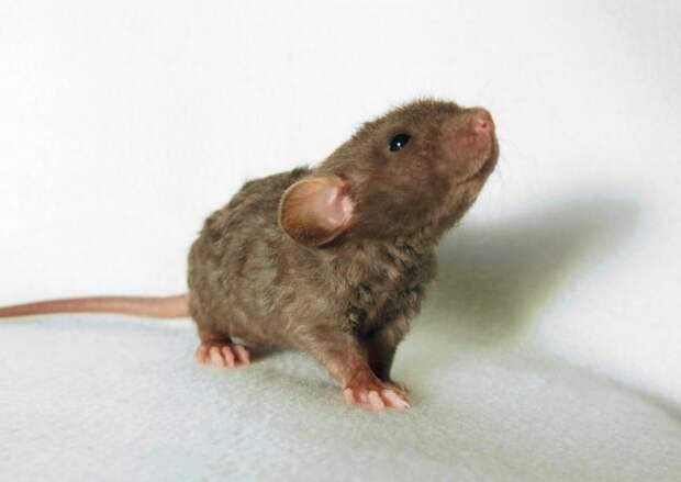 Броненосец, трубкозуб, летучие мыши и еще 17 животных
