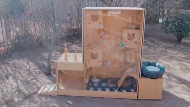 В Китае создали умный приют для бездомных кошек