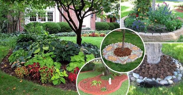 Идеи оформления приствольных кругов деревьев