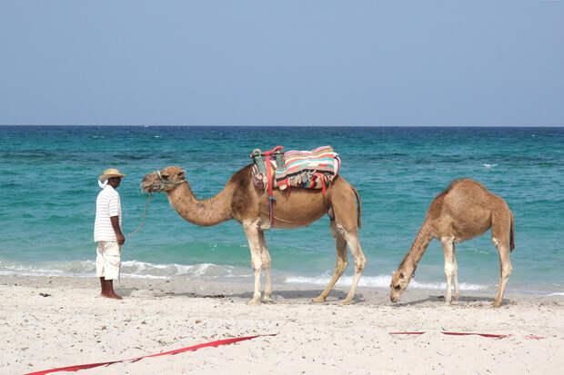 Власти Туниса обнародовали правила отдыха в условиях пандемии