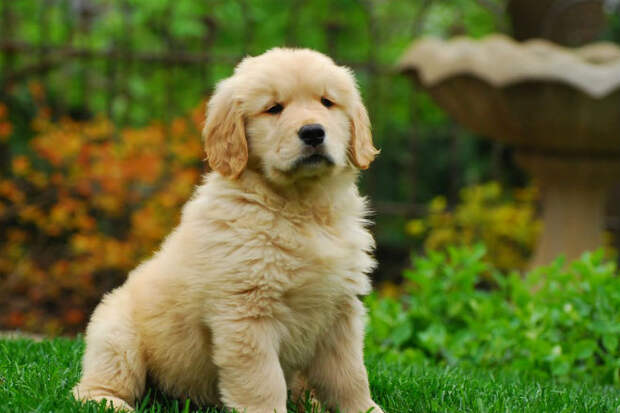 10 добрейших пород собак