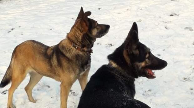 Собаки кинулись к кустам, чтобы показать владелице щенка в яме… Малыш выл от горя
