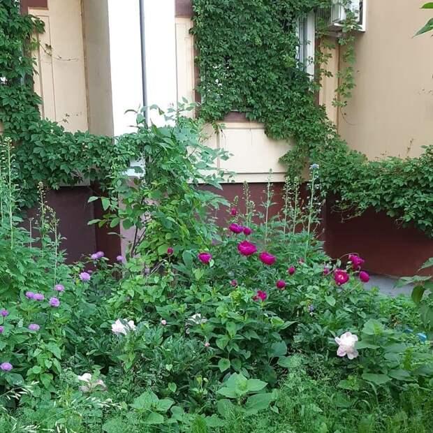 Энтузиастка из Северного высадила возле дома  цветущий сад