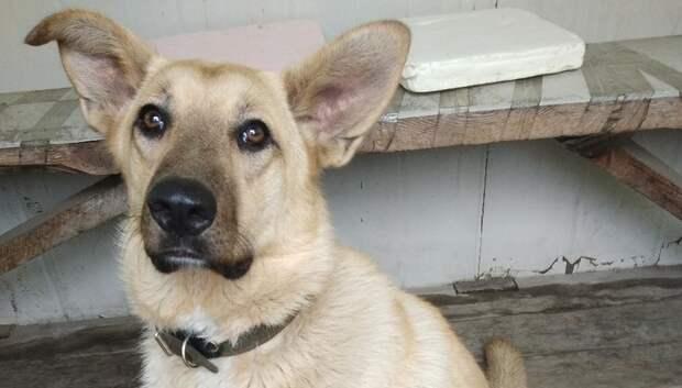 Всех бездомных собак в СНТ Подмосковья планируют чипировать за 1–2 года