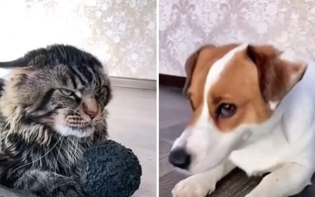 Суровый кот доказал, что он любого запугает одним лишь взглядом