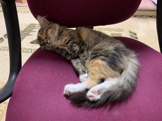 Когда и для чего стерилизовать/кастрировать кошек?