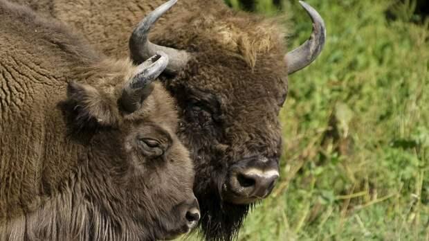 10 существ, которых люди спасли от полного вымирания (10 фото)