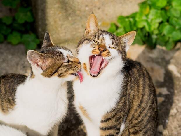День рождения с кошками...