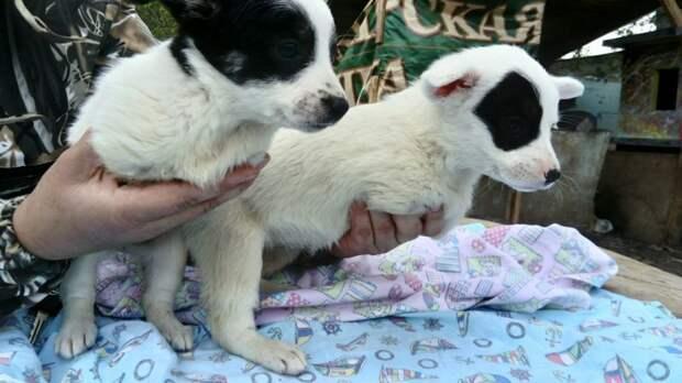 Из-за врожденной аномалии у этих щенят не было передних лапок без лапок, щенки, щенок