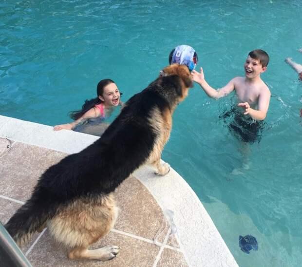 Девочка испугалась, когда пес прыгнул на нее, но через секунду он спас ей жизнь