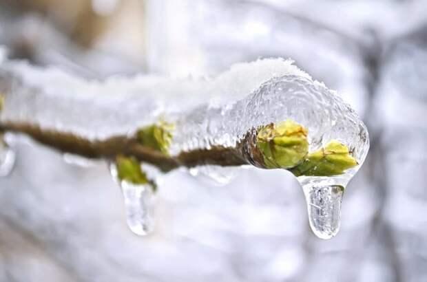 что делать если растение замерзло