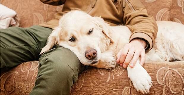 поведение собаки в семье