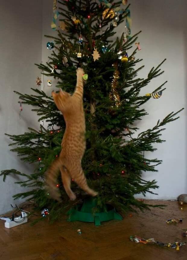 """17. """"Неправильно у вас тут все висит, надо переделать"""" животные, новый год, праздник к нам приходит, разрушительная сила, рождество, собаки и кошки, юмор"""