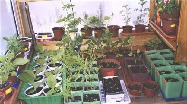 Рассада и огород в квартире. Где разместить?