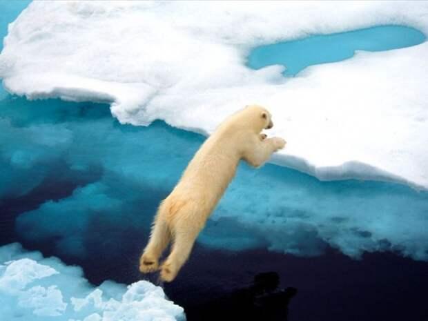 йога от белых медведей
