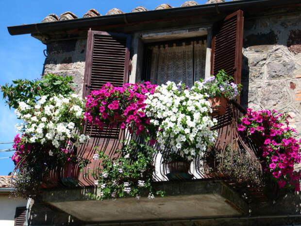 Правильное озеленение балкона в летнее время года - важная составляющая создания уюта и комфорта в городской квартире.