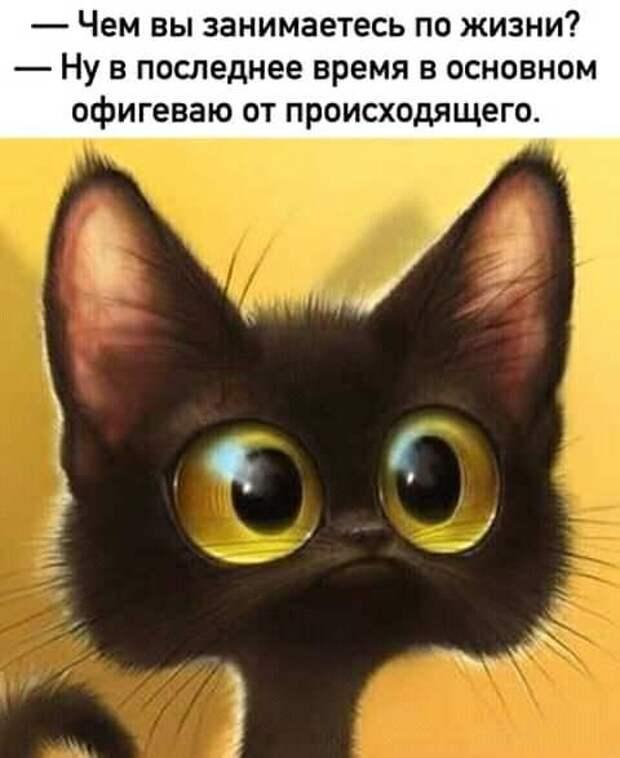 — У меня под окном вчера мартовские коты концерт устроили...