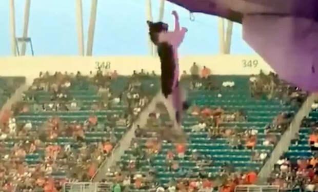 Фанаты футбола спасли кота с помощью национального флага