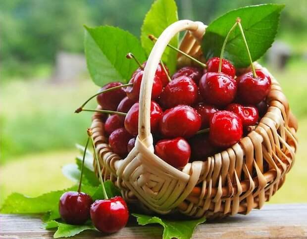 Как бороться с кислой почвой для вишни