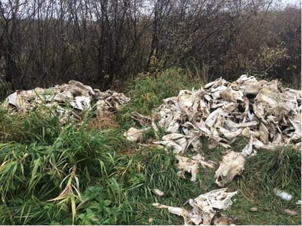 Выброшенные говяжьи головы обнаружили в Ижевске