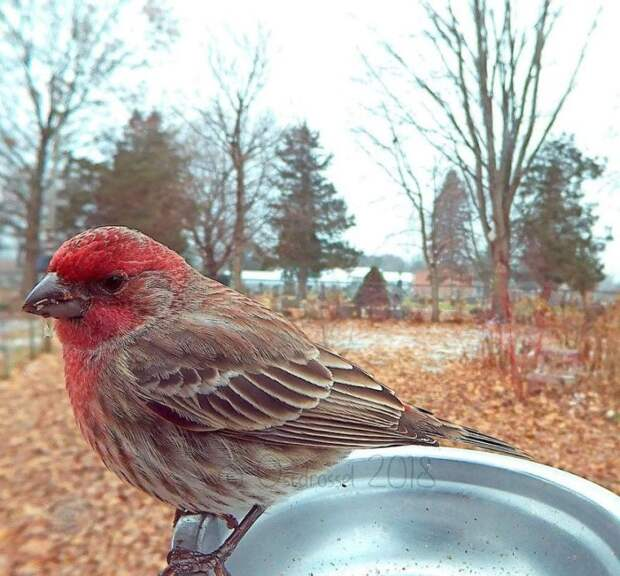 Женщина установила фото-ловушку у себя во дворе и получила невероятные снимки птиц