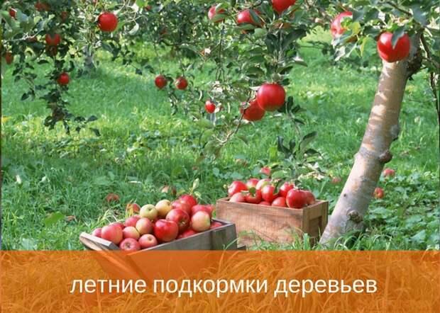 Какие удобрения применяют при летних подкормках деревьев
