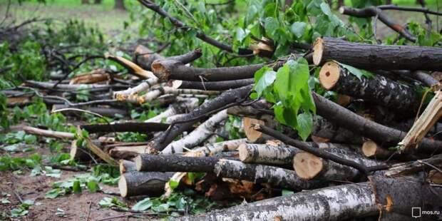 На Воротынской провели санитарную обрезку деревьев