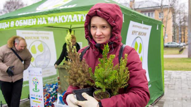 Второй шанс для новогодней елки - в Петербурге энтузиасты спасают горшечные хвойники