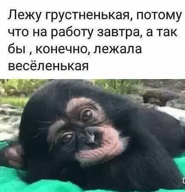 На сайте знакомств: - Я Лена, закончила Кембридж, недавно вернулась в Россию...